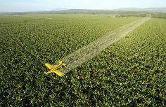 Agrotóxico pode ser o grande vilão da alergia alimentar, afirma estudo | #Agroquímicos, #Agrotóxicos, #águaDaTorneira, #Alergia, #Alimentação, #AlimentosOrgânicos, #Clorar, #ControleDePragas, #Diclorofenol, #Intolerância, #MarinaDalila, #Pesticidas