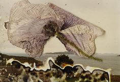 © STEPHEN GILL - 03, from the series Hackney Flowers - http://www.stephengill.co.uk/portfolio/portfolio#num=content-1498=album-44
