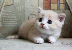 Cute ...cute...baby!! ❤Slvh❤