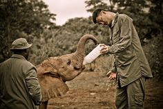 Yao Ming Feeding an Orphan Elephant at Daphne Sheldrick Orphanage. Yao was in Kenya with WildAid documenting the poaching crises, for a program to be aired in China to educate people as to the reality of the ivory trade and the death and suffering it causes.