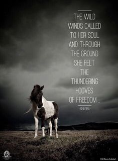 The wild winds called to her soul and through the ground she felt the thundering hooves of freedom.. - Shikoba. WILD WOMAN SISTERHOOD™