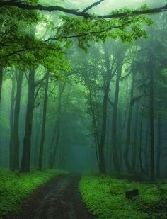 Imagine... riding horseback down thiis in-fogged infested eerie dirt road,....