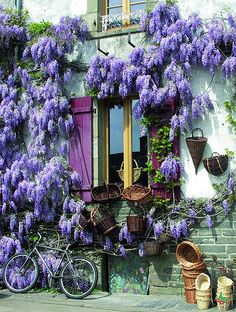I have tried to grow wisteria in southern BC - very challenging, usually unsuccessful. window at rochefort-en-terre, france Wonderful Places, Beautiful Places, Gazebos, Burgundy France, Beaux Villages, France Photos, Porches, Outdoor Gardens, Beautiful Flowers