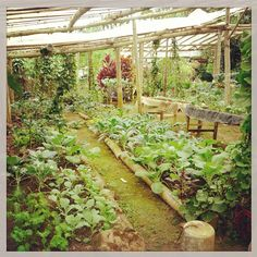 Greenhouse & permaculture