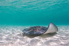 Interact with stingrays at Gibbs Cay in Grand Turk