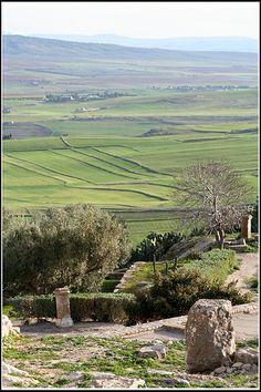 farmland, Dougga, Tunisia