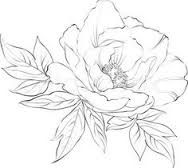 Image result for peony drawings