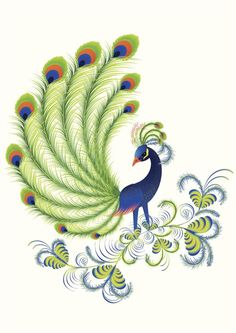 Peacock Stock Illustrations 4607