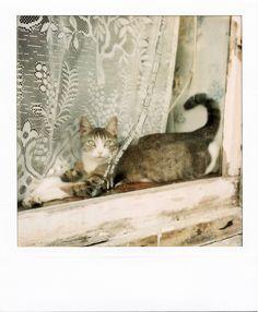 CATS IN WINDOW