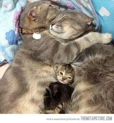 Family cuddle.