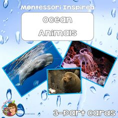 Animals Cards Free Cards PDF ocean animals Montessori inspired cards free for emembersocean animals Montessori inspired cards free for emembers Montessori, Ocean Habitat, Eagle Ray, Ocean Unit, Animal Habitats, Printable Cards, Printables, Most Beautiful Animals, Wise Owl