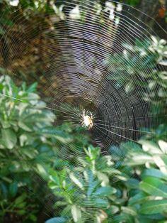 Soleil capturé dans une toile d'araignée http://www.pariscotejardin.fr/2013/09/soleil-capture-dans-une-toile-d-araignee/