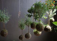 String gardens #hanging #plants