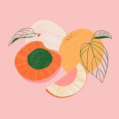 beautifully illustrated fruits