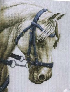 white horse, blue headstall, Page 12