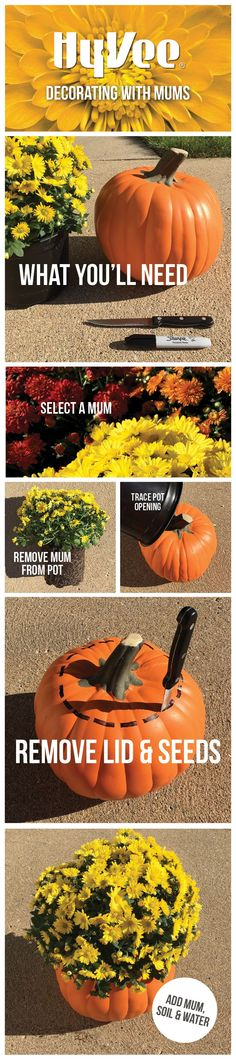 Looking for a creative way to display your mums? Plant them in pumpkins! Here's how.: