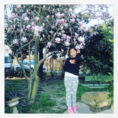under magnolia tree blossoms