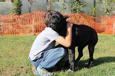 Cane Corso love Hermajesty Guardiana Guardiana Kennel