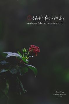 New Inspirational Quotes BakhtawerBokhari Quran Quotes Love, Quran Quotes Inspirational, Beautiful Islamic Quotes, Arabic Quotes, Wisdom Quotes, Quran Sayings, Inspiring Quotes, Qoutes, Muslim Quotes