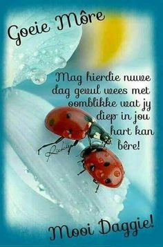 Morning Blessings, Good Morning Wishes, Day Wishes, Good Night Quotes, Morning Quotes, Lekker Dag, Afrikaanse Quotes, Goeie Nag, Goeie More