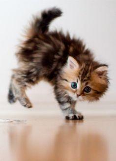 Cute kitten-fix time! #CuteKittenMonday
