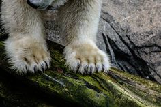 Powerful Paws Photo by Julie Chambers -- National Geographic Your Shot