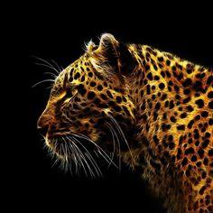 jaguar jaguar
