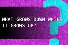What grows down while it grows up?
