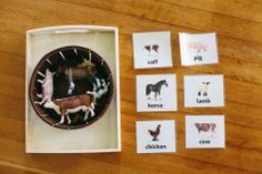 A Year of Montessori Learning: March - Bird is the Word