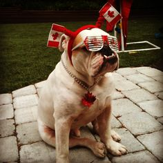 I'm into this Canada Day thing!!!!