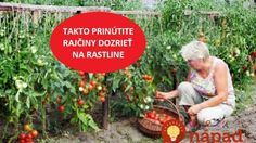 To je nápad! Gardening, Twitter, Decor, Lawn And Garden, Decoration, Decorating, Horticulture, Deco
