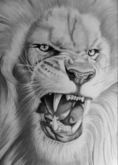 The male lion is known to reach up and over They typically live years in the wild. Wild lions currently exist in sub-Saharan Africa and in. Lion Head Tattoos, Mens Lion Tattoo, Animal Sketches, Animal Drawings, Art Drawings, Osiris Tattoo, Lion Tattoo Sleeves, Lion Photography, Lion Sketch