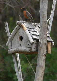 Bird House Kits Make Great Bird Houses Bird House Feeder, Bird Feeders, Birdhouse Designs, Unique Birdhouses, Birdhouse Ideas, Bird House Kits, Bird Houses Diy, Bird Aviary, Kinds Of Birds