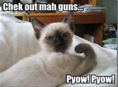Funny Animal Sayings - Bing Images