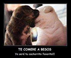 Te comere a besos... pic.twitter.com/Fxr6aVdb46