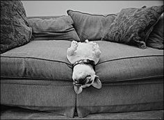 The sweet spot on the sofa.