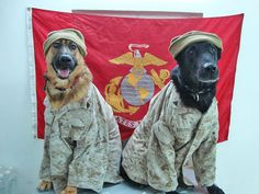 The pup on the left looks like the dog at the VCP outside Iraq, Fallujah. He loved when me and my Lady's came in,  we always had jerky in our pockets! ~♡