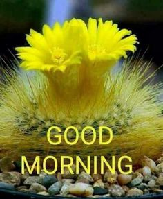 90 Top Good Morning Nature Images In 2019 Buen Dia Good Morning