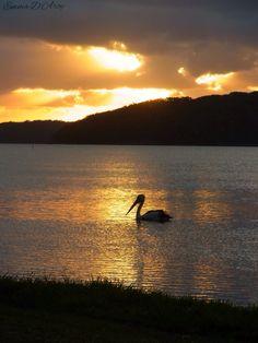 Swansea NSW Aust