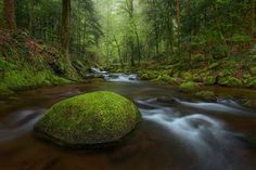 German Rainforest__Germany by Michael Breitung on 500px