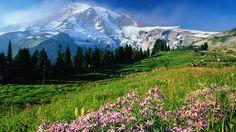 Dead Horse Trail in Mt Rainier National Park, Washington--and other Northwest travel destinations