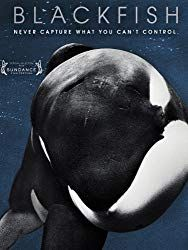 When does Blackfish come out on DVD and Blu-ray? DVD and Blu-ray release date set for November Also Blackfish Redbox, Netflix, and iTunes release dates. This is a documentary that examines the story of Tilikum, a killer whale who killed three people . Best Documentaries On Netflix, Vegan Documentaries, Films Netflix, Blackfish Movie, Blackfish Documentary, Documentary Film, Amazon Instant Video, Sundance Film Festival, Thing 1