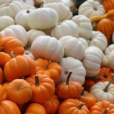 nature's halloween decorations at the farmers market this morning 🎃 #F4F #L4L #amazing #munchies