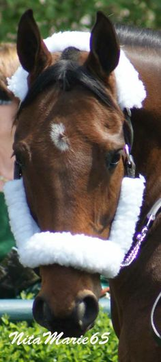 Mine that bird at Keeneland April 2014 please dont remove watermark from pictures when repinning thanks!