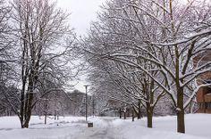 of snow, University of Waterloo Tree Care, Alma Mater, Canada, Snow, Memories, Winter, Board, Nature, Naturaleza