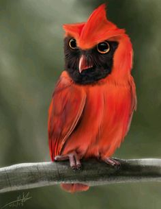 Exotic pets 423056958747356387 - A quick fusion of an owl and a cardinal. If you would like to share this image elsewhere, please give me proper credit and provide a link back to this page. Source by cecilieokadadesign Rare Birds, Exotic Birds, Colorful Birds, Exotic Pets, Pretty Birds, Beautiful Birds, Animals Beautiful, Owl Pictures, Tier Fotos