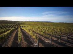 The Yealands Family Wines Story Wines, Sustainability, Vineyard, World, Nature, Youtube, Outdoor, The World, Outdoors