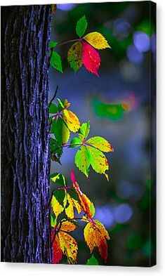 35 super Ideas for leaf nature leaves colour Studio Background Images, Photo Background Images, Background Images Wallpapers, Photo Backgrounds, Bokeh Wallpaper, Orange Wallpaper, Fall Background, Backdrop Background, Digital Backgrounds