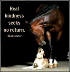 Discover and share Famous Horse Quotes And Sayings. Explore our collection of motivational and famous quotes by authors you know and love. Horse Quotes, Dog Quotes, Life Quotes, Animal Quotes, Equestrian Quotes, All About Horses, Horses And Dogs, Horse Love, Beautiful Horses