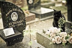 """As strange as it sounds, Paris has a dog cemetery; """"Le cimetière des chiens"""". Created in 1899, it is believed to be the first pet cemetery in the world. You will find hundreds of tumbs under the shade of trees longing the Seine River. You will also be amazed by some of the tumbs, worthy of the greatest human celebrities. Yet, there are still some living souls in this cemetery as a dozen of cats pace up and down the alleys. You can almost hear them cry on the graves of their buddies cat."""